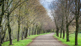 Beautiful Alley in Spring Park Royalty Free Stock Image