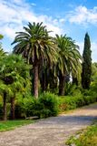 Beautiful alley with palm trees. Beautiful alley with subtropical palm trees. Resort in Gagra city, Abkhazia Royalty Free Stock Photo
