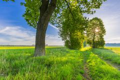 Beautiful alley of trees on old forgotten sandy road Stock Image