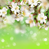 Beautiful almond. S flower with bokeh background Stock Photo
