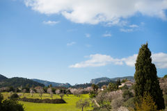 Beautiful almond trees in spanish landscape Stock Photography
