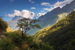 Beautiful alone tree against amazing Himalayan mountains Royalty Free Stock Images
