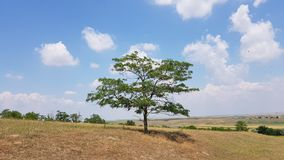 Beautiful alone tree. Superb scenery with tree alone Stock Photography