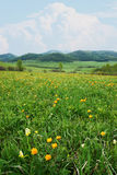 Beautiful alpine landscape with bright colorful flowers Royalty Free Stock Photography