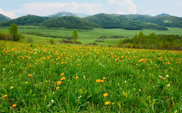 Beautiful alpine landscape with colorful flowers Stock Images