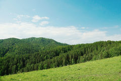 Beautiful alpine landscape with green wooded hills Royalty Free Stock Images
