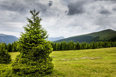 Beautiful alpine landscape with pines Stock Image