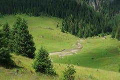 Beautiful alpine meadow Stock Photos