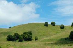 Beautiful alpine meadow Stock Image