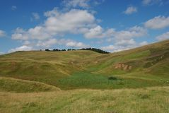 Beautiful alpine meadow Royalty Free Stock Photos