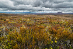 Beautiful alpine meadows in Tongariro national park Stock Photography