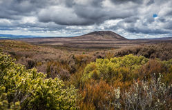 Beautiful alpine meadows in Tongariro national park. New Zealand Stock Photography
