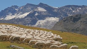 Beautiful alpine panorama with sheep flock in a sunny day stock video footage