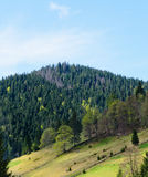 Beautiful alpine pine forests Royalty Free Stock Photos