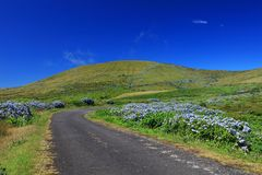 Beautiful alpine road on Flores Island in a sunny day stock photos