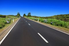 Beautiful alpine road on Flores Island in a sunny day stock images