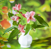Beautiful alstroemeria lily flowers in white vase Stock Photography