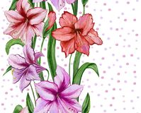 Beautiful amaryllis flowers with green leaves on white dotted background. Seamless floral pattern. Watercolor painting. Hand painted illustration. Design of Stock Photos