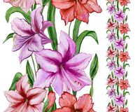 Beautiful amaryllis flowers with leaves in straight lines on white background. Seamless floral pattern. Watercolor painting. Hand drawn and painted Stock Photos