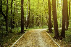 Beautiful amazing path road through the trees in autumn forest with fallen yellow leaves concept Stock Photography