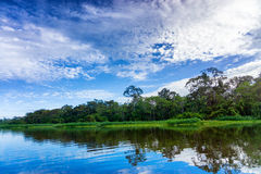 Beautiful Amazon Landscape stock photography