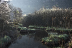Beautiful ambience on a wild bog, See d'urbés, France Stock Photo