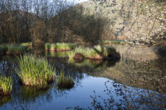 Beautiful ambience on a wild bog, See d'urbés, France Stock Photography