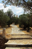Beautiful ancient gardens at the bottom of Acropolis, in Athens Royalty Free Stock Photo