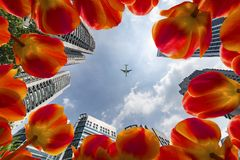Beautiful And Fragile Nature In The City Stock Image