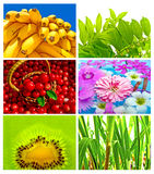 Beautiful And Healthy Mix Royalty Free Stock Images