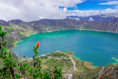 Beautiful andean plant chuquiragua, with an amazing view of lake of the Quilotoa caldera in the back. Quilotoa is the Stock Photos