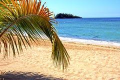 beautiful andilana beach seaweed in indian ocean leaf Royalty Free Stock Photography
