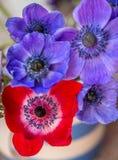 Beautiful Anemone flowers multi coloured stock illustration