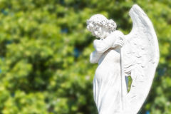 Beautiful angel on a diffused trees background Stock Photography