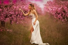 Girl in pink dress in blooming gardens royalty free stock photography