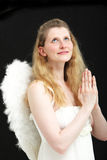 Beautiful angel praying to heaven. Beautiful blonde angel with feathery white wings looking up and praying to heaven on a black studio background Royalty Free Stock Photos