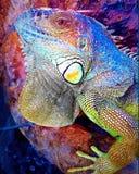 Beautiful animal Stock Photography