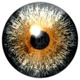 Beautiful animal eagle eyeball vector illustration