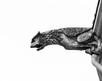 Beautiful animal gargoyle on medieval church Stock Image