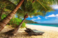 Beautiful Anse Intendance beach at Mahe Island, Seychelles. Paradise Palm trees on Anse Intendance beach at Mahe Island, Seychelles Stock Photo