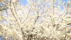Beautiful apple tree branch stock video footage