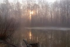 Beautiful April morning. Spring, April foggy morning in the woods Stock Photography