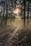 Beautiful April morning. Spring, April foggy morning in the woods Stock Photo