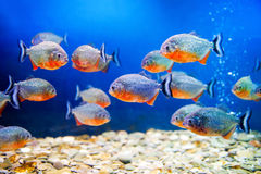 Beautiful  aquarium Stock Photography
