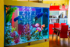 The Beautiful aquarium with colorful fish in a room to modern apartment Stock Photo
