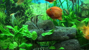 Beautiful aquarium stock footage