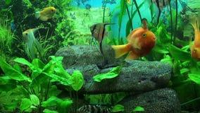 Beautiful aquarium Royalty Free Stock Images