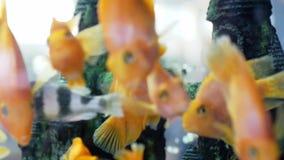 Beautiful aquarium marine life in slow motion. 1920x1080 stock video footage