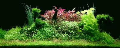 Real Aquascape in 300 liters aquarium. Beautiful Aquascape tank with black background in 300 liter aquarium with black bagground stock photography