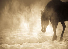 Beautiful arabian horse in the fog Royalty Free Stock Images